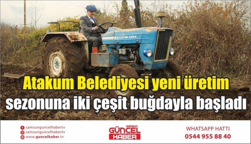 Atakum Belediyesi yeni üretim sezonuna iki çeşit buğdayla başladı