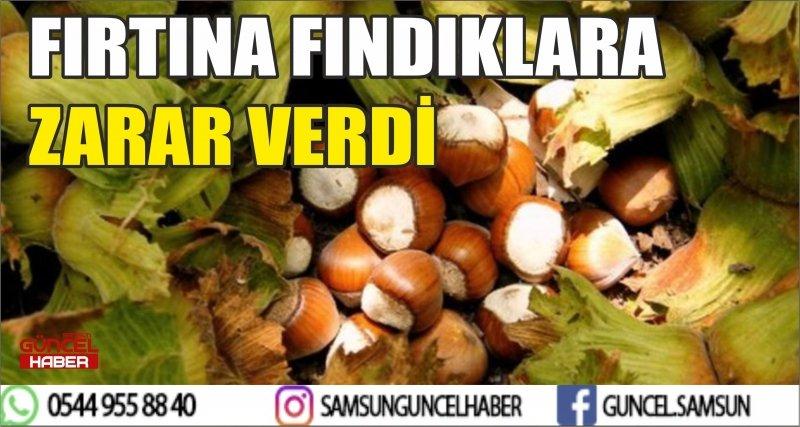 FIRTINA FINDIKLARA ZARAR VERDİ