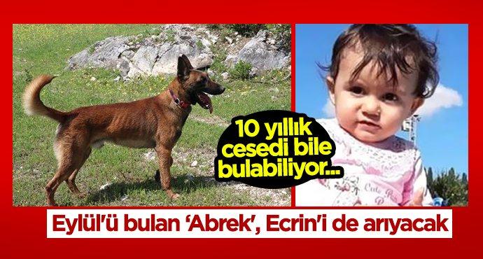 Minik Ecrin'i 'Abrek' arıyacak