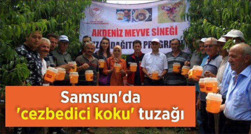 Samsun'da 'cezbedici koku' tuzağı