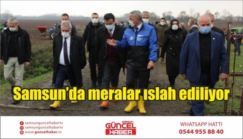 Samsun'da meralar ıslah ediliyor