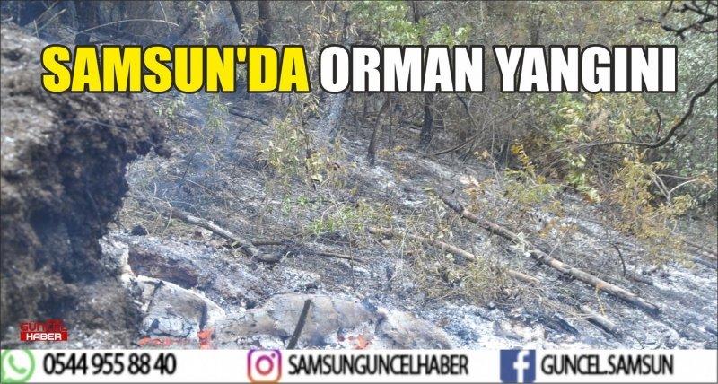 SAMSUN'DA ORMAN YANGINI