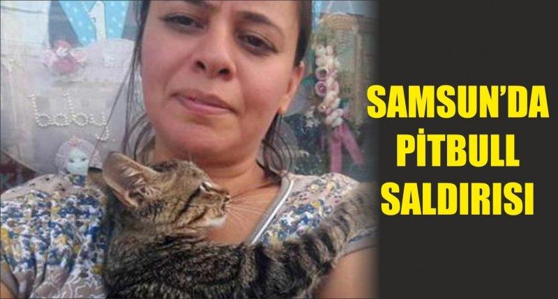 SAMSUN'DA PİTBULL SALDIRISI