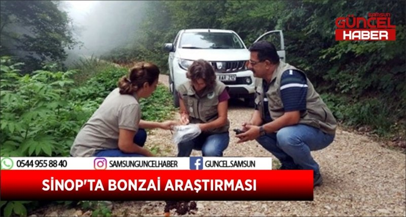 SİNOP'TA BONZAİ ARAŞTIRMASI