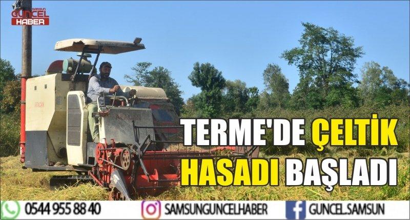 TERME'DE ÇELTİK HASADI BAŞLADI
