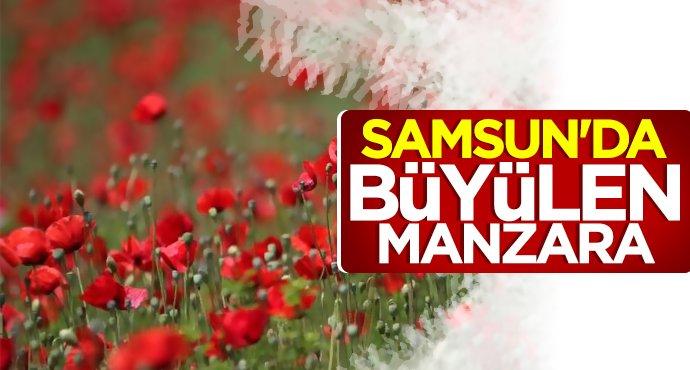 Samsun'da büyüleyen manzara