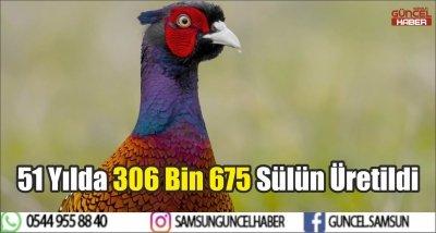 51 Yılda 306 Bin 675 Sülün Üretildi
