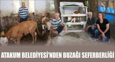 ATAKUM BELEDİYESİ'NDEN BUZAĞI SEFERBERLİĞİ