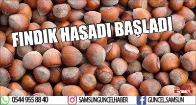FINDIK HASADI BAŞLADI