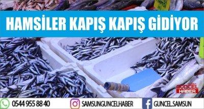 HAMSİLER KAPIŞ KAPIŞ GİDİYOR
