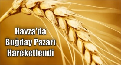 Havza'da Buğday Pazarı Hareketlendi