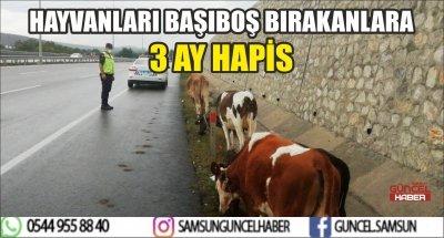 HAYVANLARI BAŞIBOŞ BIRAKANLARA 3 AY HAPİS