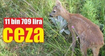 Karaca yavrularını yakalayan kişiye 11 bin 709 lira ceza