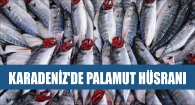 KARADENİZ'DE PALAMUT HÜSRANI