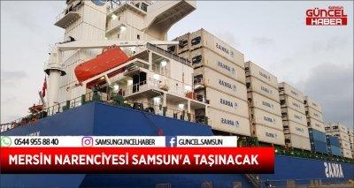 MERSİN NARENCİYESİ SAMSUN'A TAŞINACAK