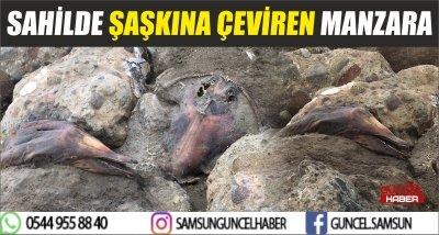 SAHİLDE ŞAŞKINA ÇEVİREN MANZARA