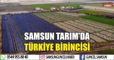 SAMSUN TARIM'DA TÜRKİYE BİRİNCİSİ