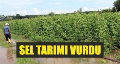 Samsun'da sel tarım arazilerini vurdu
