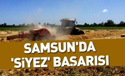 Samsun'da 'siyez' başarısı