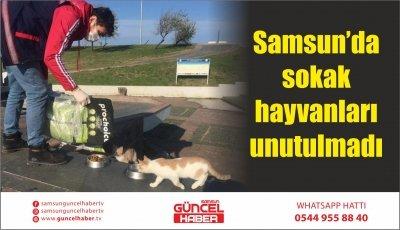 Samsun'da sokak hayvanları unutulmadı
