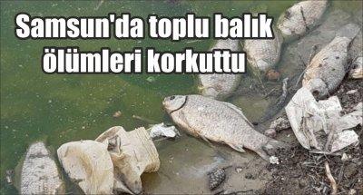 Samsun'da toplu balık ölümleri korkuttu