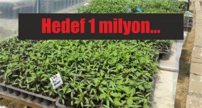 Samsun'da üretiyorlar: Hedef 1 milyon...