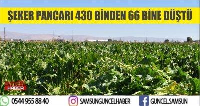 ŞEKER PANCARI 430 BİNDEN 66 BİNE DÜŞTÜ