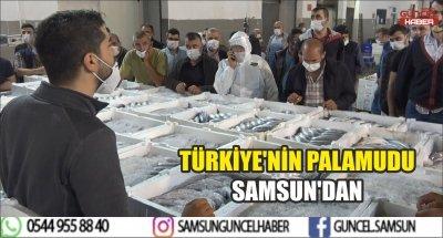 TÜRKİYE'NİN PALAMUDU SAMSUN'DAN