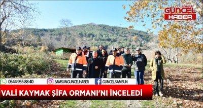 VALİ KAYMAK ŞİFA ORMANI'NI İNCELEDİ